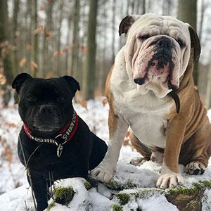 zwei Hunde vom Team von World of Mall