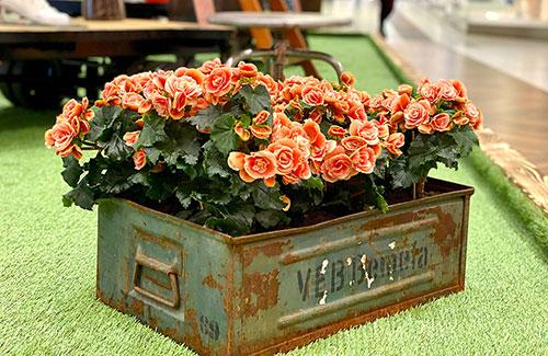 Florale Gestaltung im Shoppingcenter
